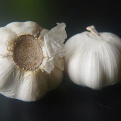 Garlic, the immunity booster